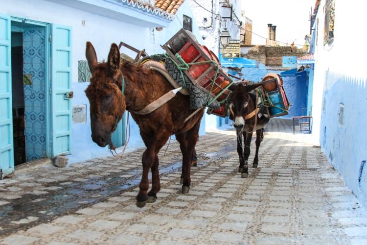 donkeys morocco