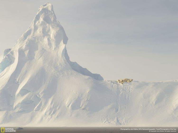 Bears on a Berg