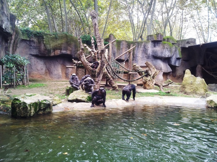 Monkeys_zoo Barcelona