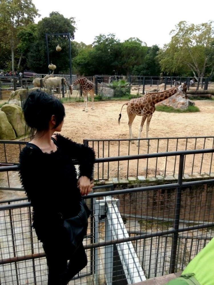 Zoo_girafa