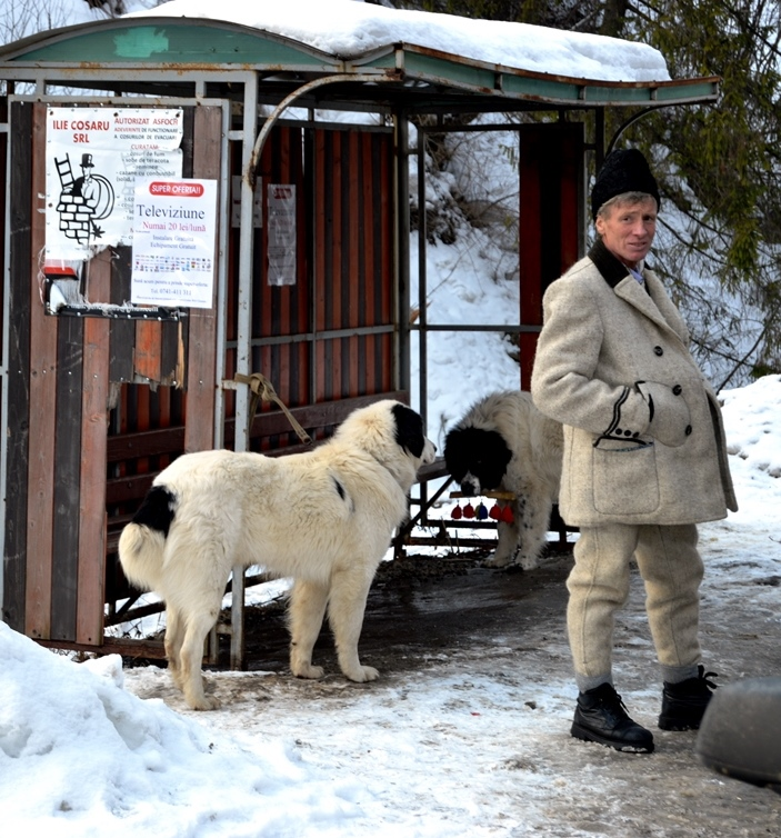 dogs_tradition_romania