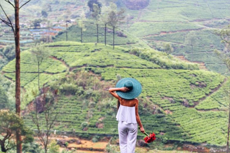 Sri Lanka - plantatii ceai.JPG