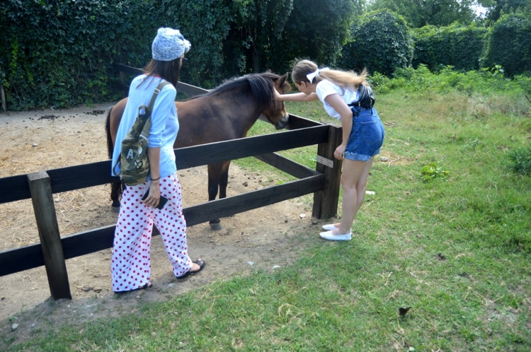 ponei adapost pentru cai